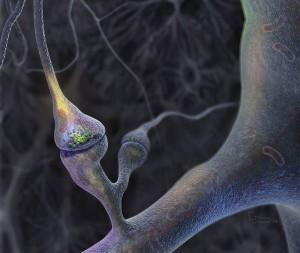synapse firing a signal